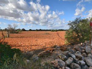Baugrundstück bei Algaida